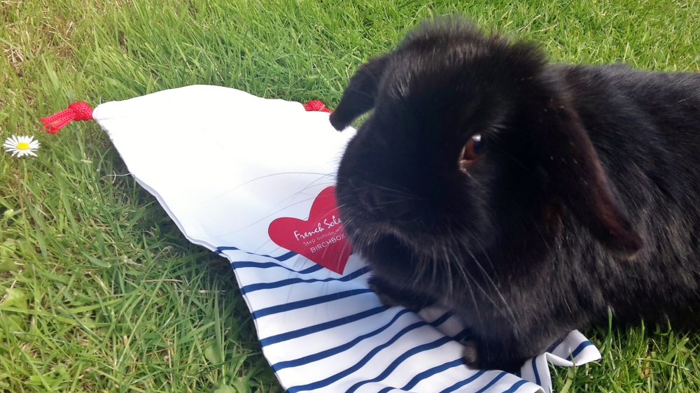 Truffles the rabbit with French Sole shoe bag for June 2015 Birchbox