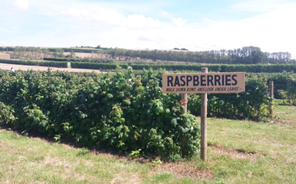 Roundstone Pick-Your-Own farm, West Sussex